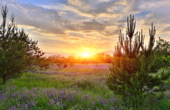 Sunset over meadow royalty free stock image