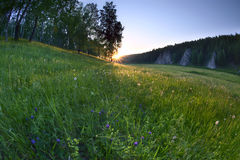 Sunset over meadow with dandelions Stock Photography