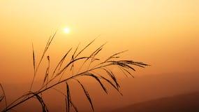 Sunset over meadow mountain Stock Photos