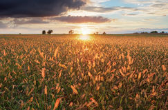 Sunset over meadow, rural scene.  Stock Images