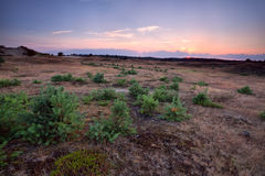 Sunset over meadow with small pine trees Royalty Free Stock Photo