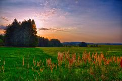 Sunset over meadow and spruce trees at summer evening, sunlight, sky, green grass.Relaxing atmosphere. Countryside landscape. HDR photo Stock Photography