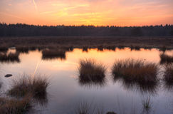 Sunset over a moor. Red sky and in the distance a forest stock photography