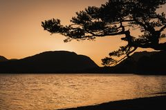 Sunset over mountain lake. In English Lake District.Beautiful golden hour scenery.Silhouetted tree and mountains in background.Perfect for print, post card, or royalty free stock photo