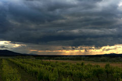 Sunset over a mountain vineyard Royalty Free Stock Photo