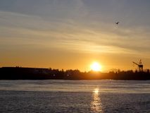 Sunset over Oakland Inner Harbor and Alameda with Bird flying in Royalty Free Stock Image