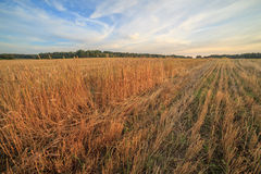 Sunset over an oblique field. Stock Images