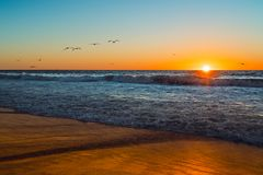 Sunset over the ocean with flock of birds royalty free stock photography