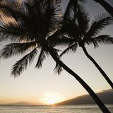 Sunset over ocean with palms. Stock Images
