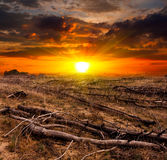 Sunset Over Old Dead Trees Stock Image