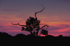 Sunset Over Olive Tree. Silhouette of a lonely olive tree in the sunset light- Island Of Mallorca, Spain Stock Photo
