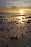 Sunset over Pacific Ocean. Kelp in foreground Stock Photography