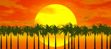 Sunset over palm tree. Red sunset over palm tree Vector Illustration