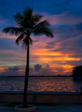 Sunset over palm tree. Royalty Free Stock Images