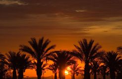 Sunset over palm trees Royalty Free Stock Images