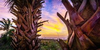 Sunset Over Palm Trees in a Caribbean Paradise Stock Photo