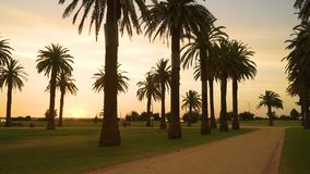 Sunset over palm trees at Saint Kilda in Melbourne in Australia in the summer stock footage