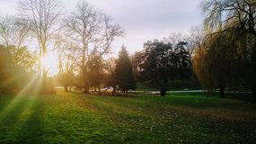 Sunset over Parc Barbieux in Roubaix, France on a brisk winter evening. The sunlight splits into rays of light protruding between the trees Royalty Free Stock Image