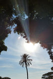 Sunset over parkland. The sun setting over a palm tree in the parkland Royalty Free Stock Photo
