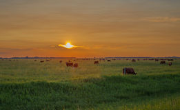Sunset over pasture Stock Image