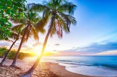 Plage de la Perle. Sunset over Pearl beach Plage de la Perle beach near Deshaies, Guadeloupe, Caribbean Stock Image