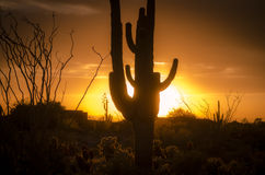 Sunset over Phoenix, Az with cactus tree Royalty Free Stock Photo
