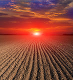 Sunset over plugged field Stock Image