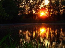 Sunset over the pond Stock Photography