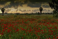 Sunset Over a Poppies Meadow Royalty Free Stock Images