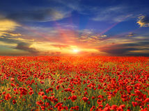 Sunset over poppy field Stock Image