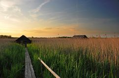 Sunset over Reeds. The sun sets over fields of reeds near the Federsee (Feather Lake) in southern Germany Royalty Free Stock Image