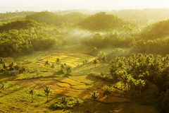 Sunset over rice field Stock Image