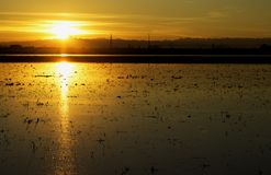 Sunset over the rice field Royalty Free Stock Images