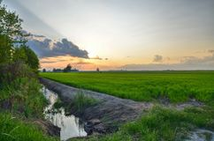 Sunset over the rice fields in Italy royalty free stock photography