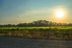 Sunset over the rice fields Stock Photo