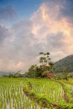 Sunset over rice fields terrace, Bali Stock Photos