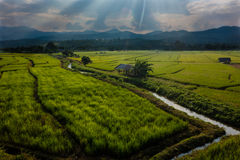 Sunset over the rice fields in Thailand. With the rays of light dispersed in a Jacob's ladder. In the background the mountains . In the area of Chiang Mai Stock Images
