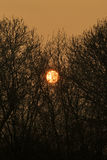 Sunset over the River Ouse. Sunset, through trees Royalty Free Stock Image