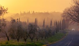 Sunset over a road with cypresses and olive trees in Tuscany royalty free stock photos