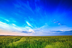 Sunset over rural countryside field Stock Images
