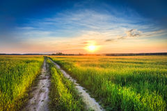 Sunset over rural road in green field Stock Photography