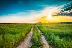 Sunset over rural road in green field Royalty Free Stock Photography