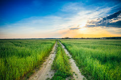 Sunset Over Rural Road In Green Summer Field Royalty Free Stock Image