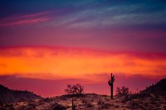 A Sunset over a Saguaro Cactus. In the Sonoran Desert of Arizona stock image