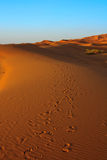 Sunset over Sahara desert Royalty Free Stock Images