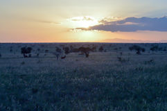 Sunset over the savana Royalty Free Stock Photography
