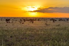 Sunset over the savanna Stock Photos