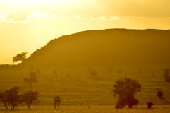 Sunset over the savanna Royalty Free Stock Images