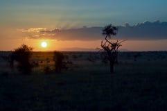 Sunset over the savanna Stock Photo