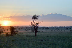 Sunset over the savanna Stock Images